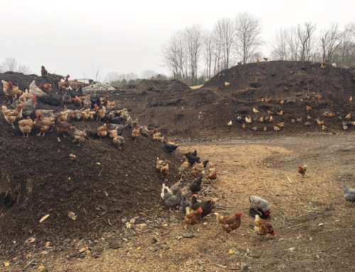 Composting has spiked since food scraps were banned from landfills